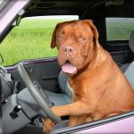 Driving Lessons GMS